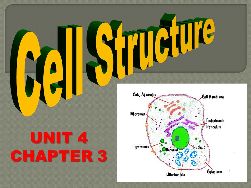 Cell Structure UNIT 4 CHAPTER 3