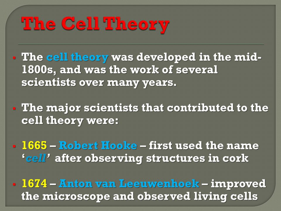 The Cell Theory The cell theory was developed in the mid- 1800s, and was the work of several scientists over many years.