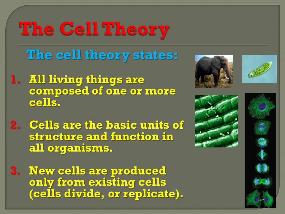 The Cell Theory The cell theory states: