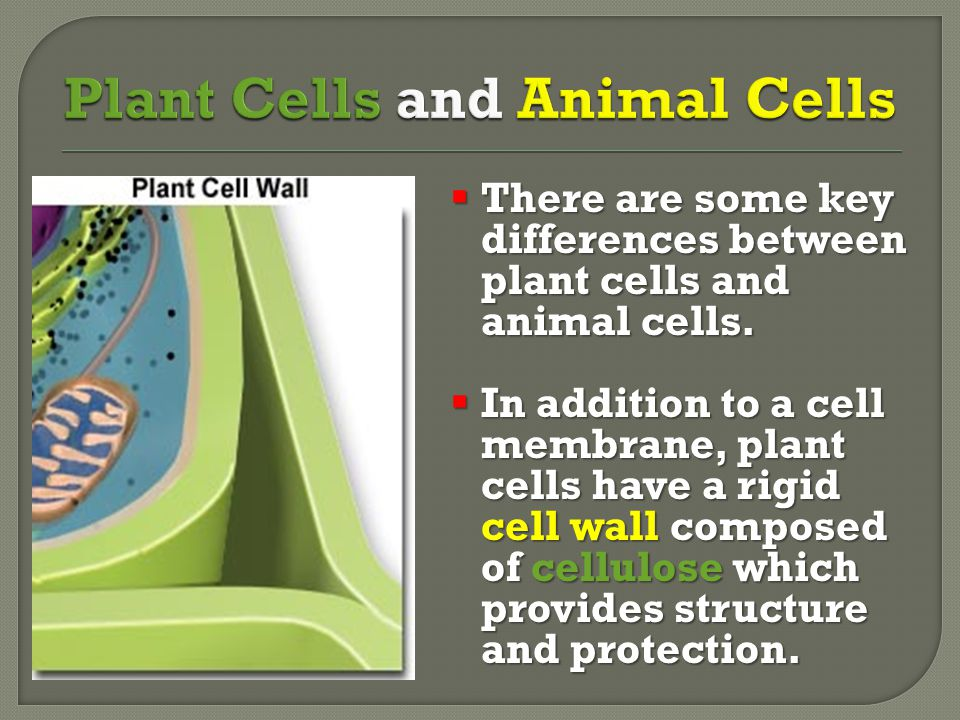 Plant Cells and Animal Cells
