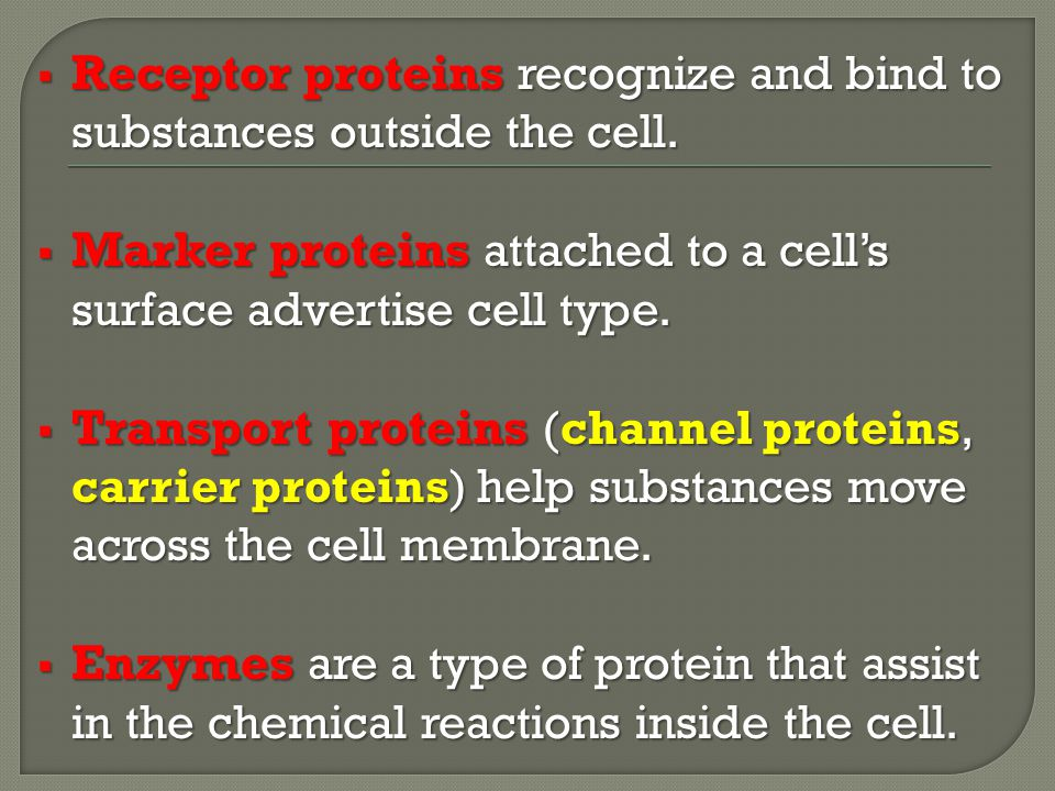 Receptor proteins recognize and bind to substances outside the cell.