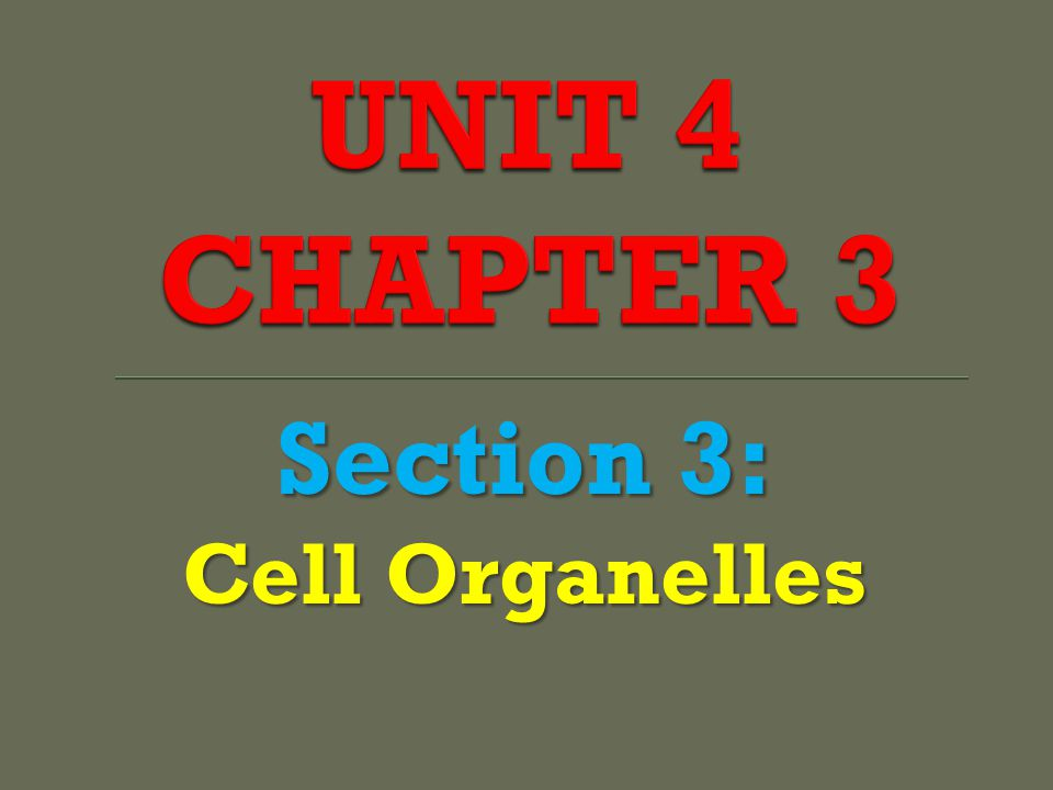 UNIT 4 CHAPTER 3 Section 3: Cell Organelles