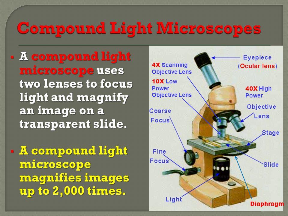 Compound Light Microscopes