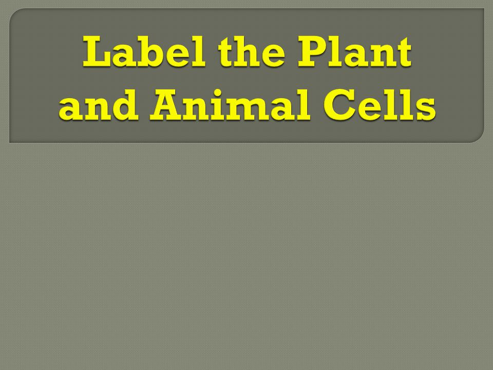 Label the Plant and Animal Cells