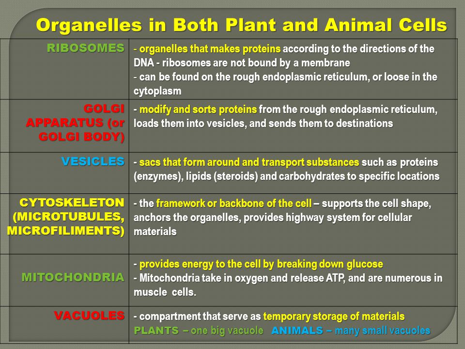 Organelles in Both Plant and Animal Cells