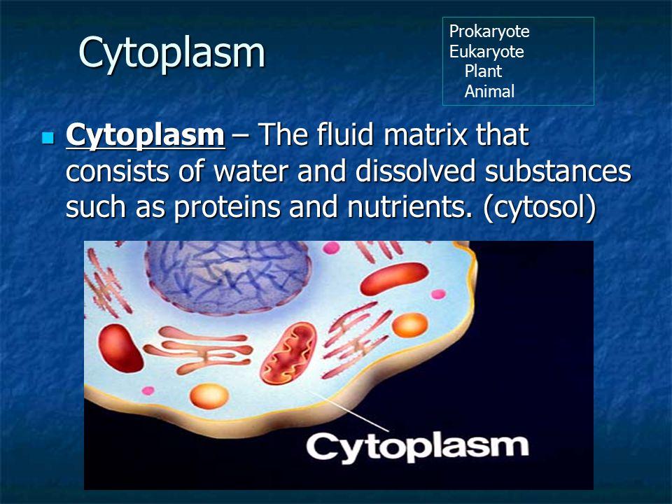 Cytoplasm Prokaryote. Eukaryote. Plant. Animal.