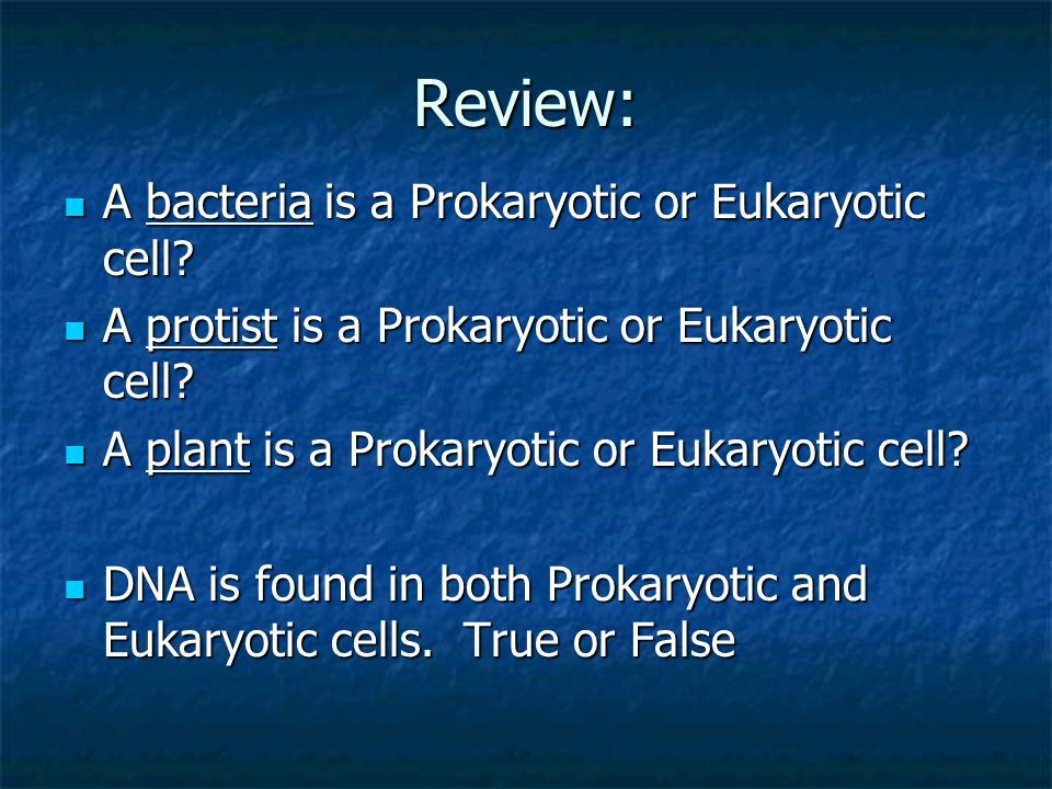 Review: A bacteria is a Prokaryotic or Eukaryotic cell