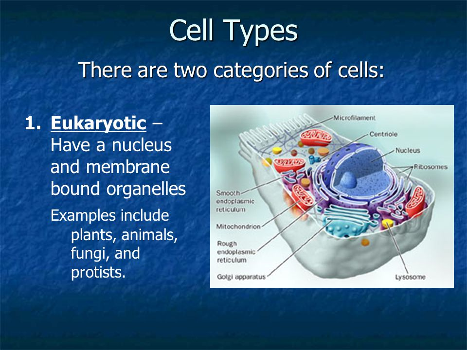 There are two categories of cells:
