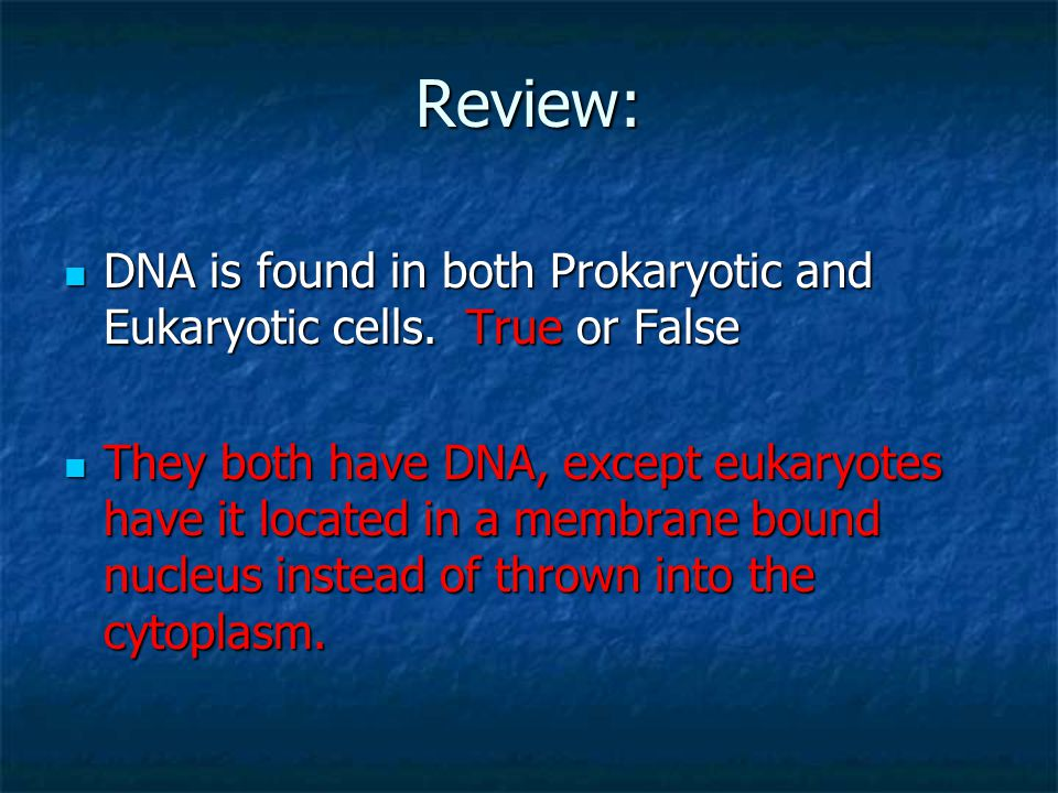 Review: DNA is found in both Prokaryotic and Eukaryotic cells. True or False.