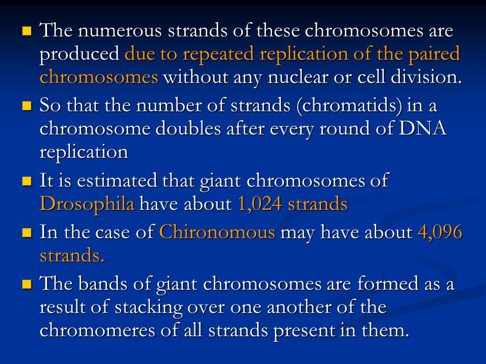 The numerous strands of these chromosomes are produced due to repeated replication of the paired chromosomes without any nuclear or cell division.