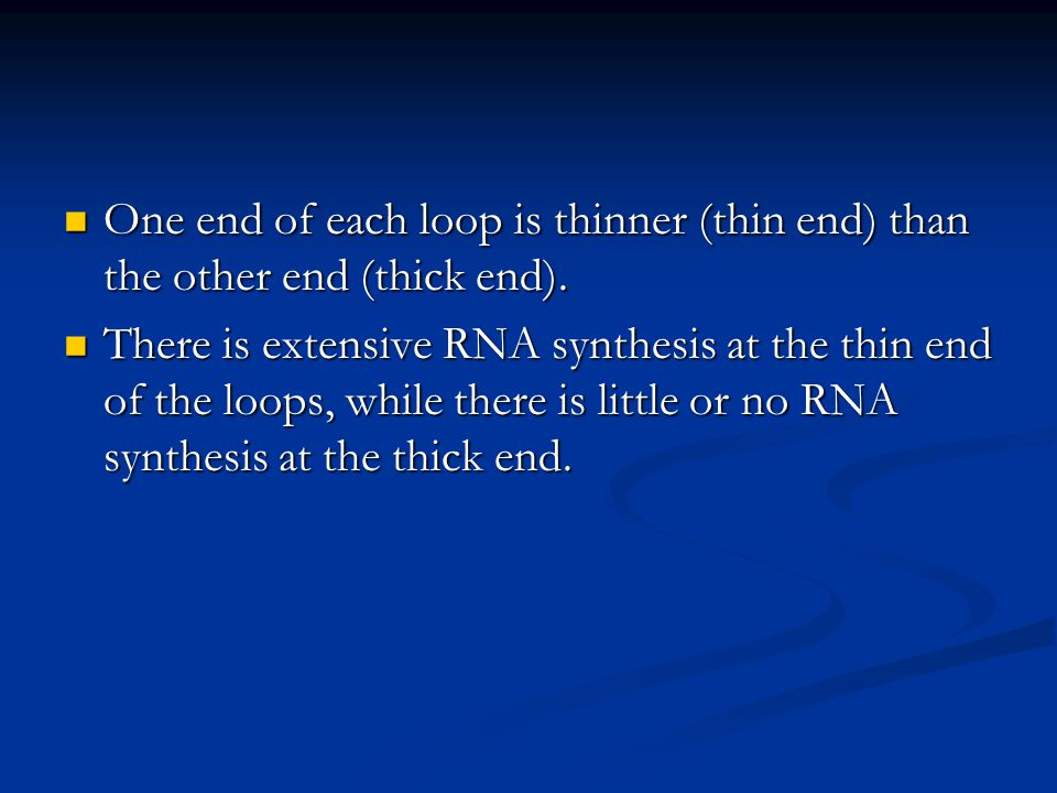 One end of each loop is thinner (thin end) than the other end (thick end).