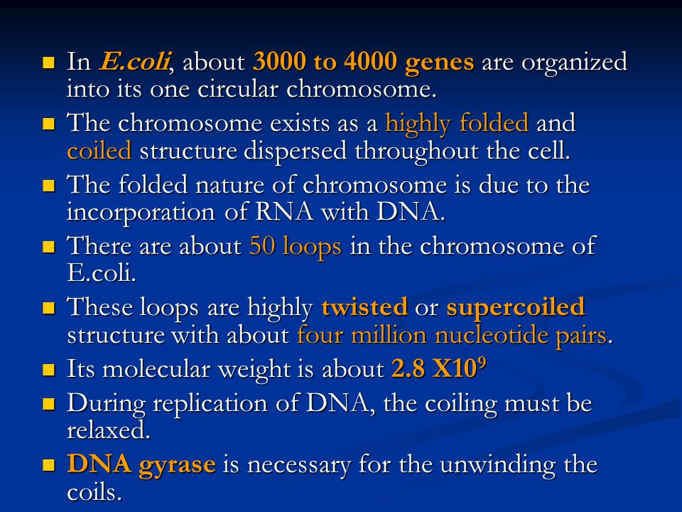 In E.coli, about 3000 to 4000 genes are organized into its one circular chromosome.