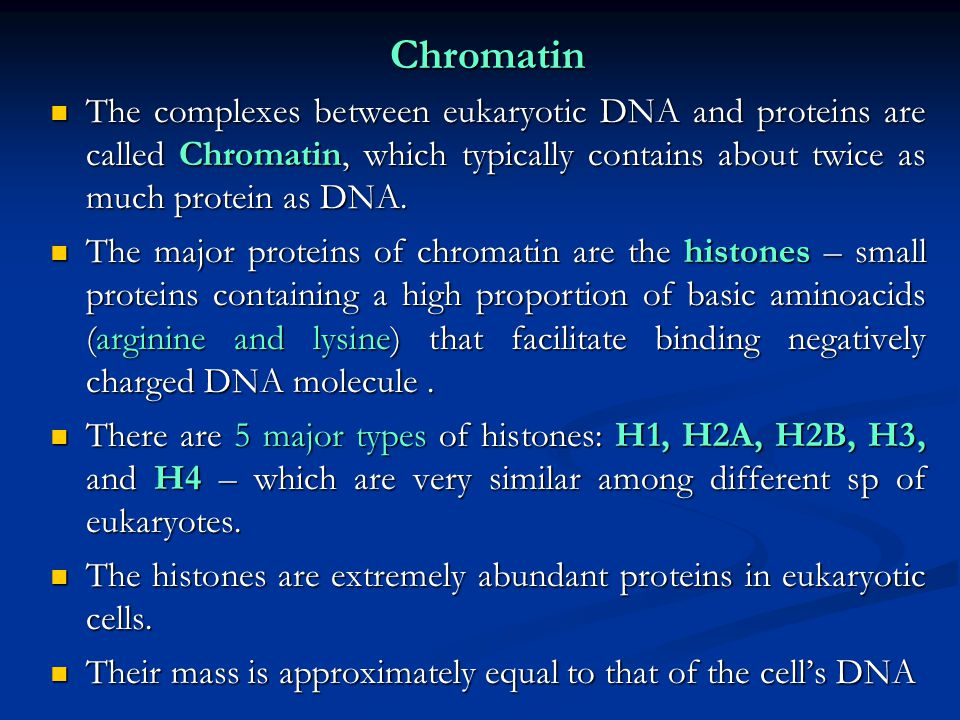 Chromatin The complexes between eukaryotic DNA and proteins are called Chromatin, which typically contains about twice as much protein as DNA.