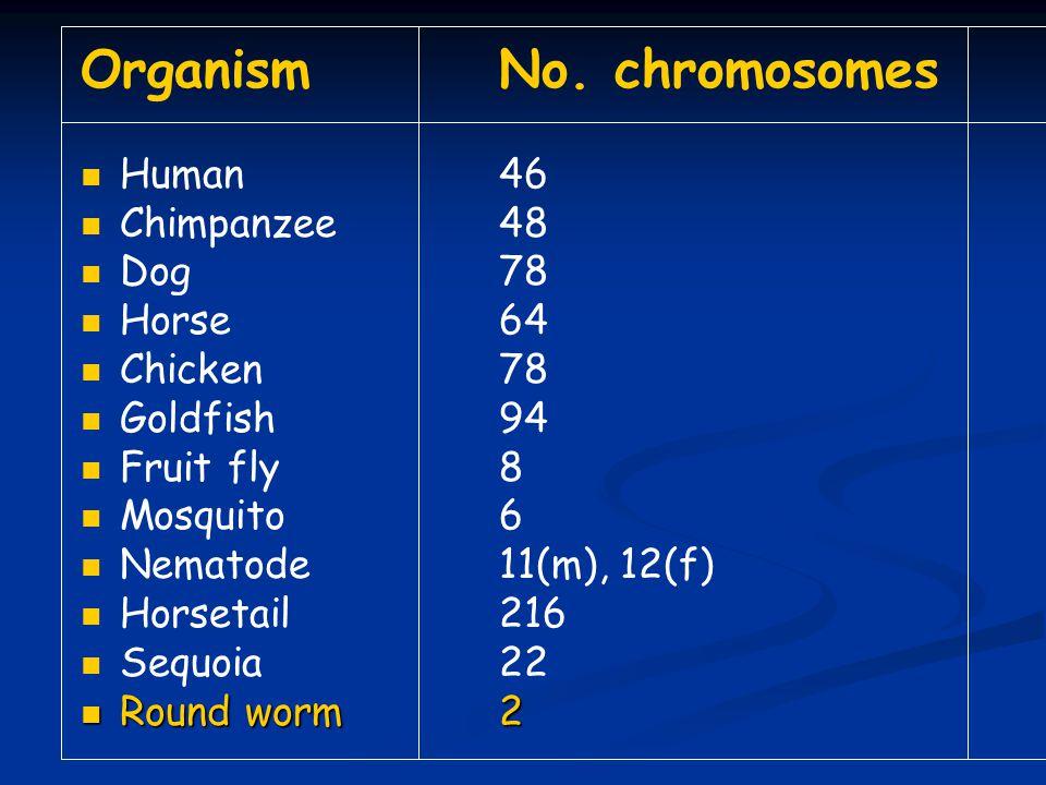 Organism No. chromosomes