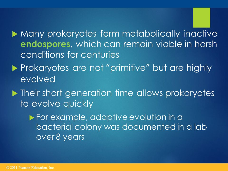 Prokaryotes are not primitive but are highly evolved