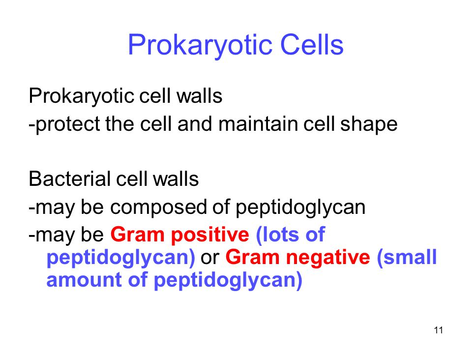 Prokaryotic Cells Prokaryotic cell walls