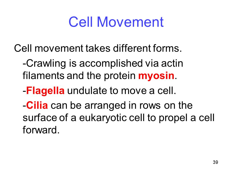 Cell Movement Cell movement takes different forms.