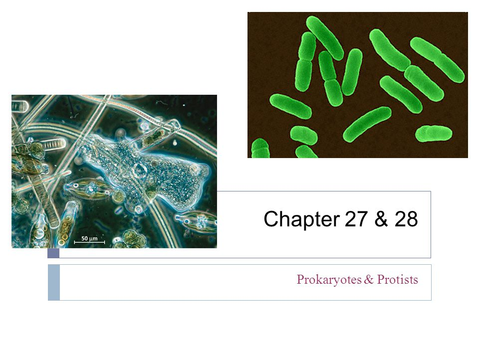 Prokaryotes & Protists