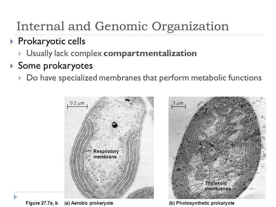 Internal and Genomic Organization