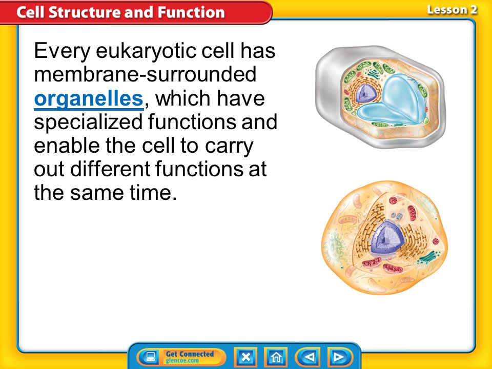 Every eukaryotic cell has membrane-surrounded organelles, which have specialized functions and enable the cell to carry out different functions at the same time.