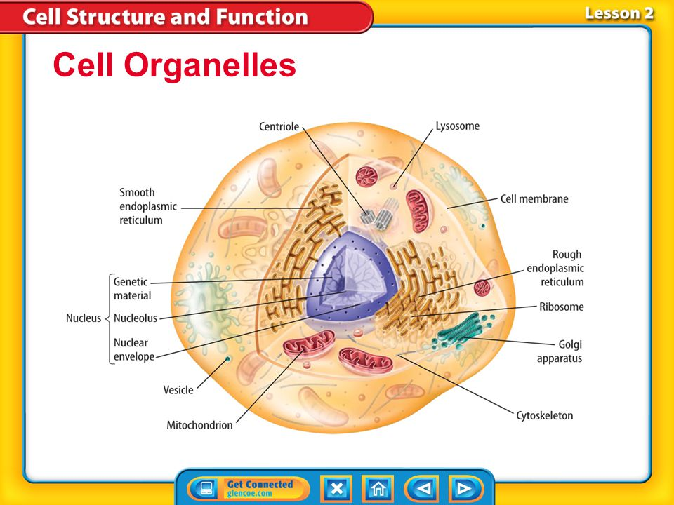 Organelles That Store Food Water And Waste Material