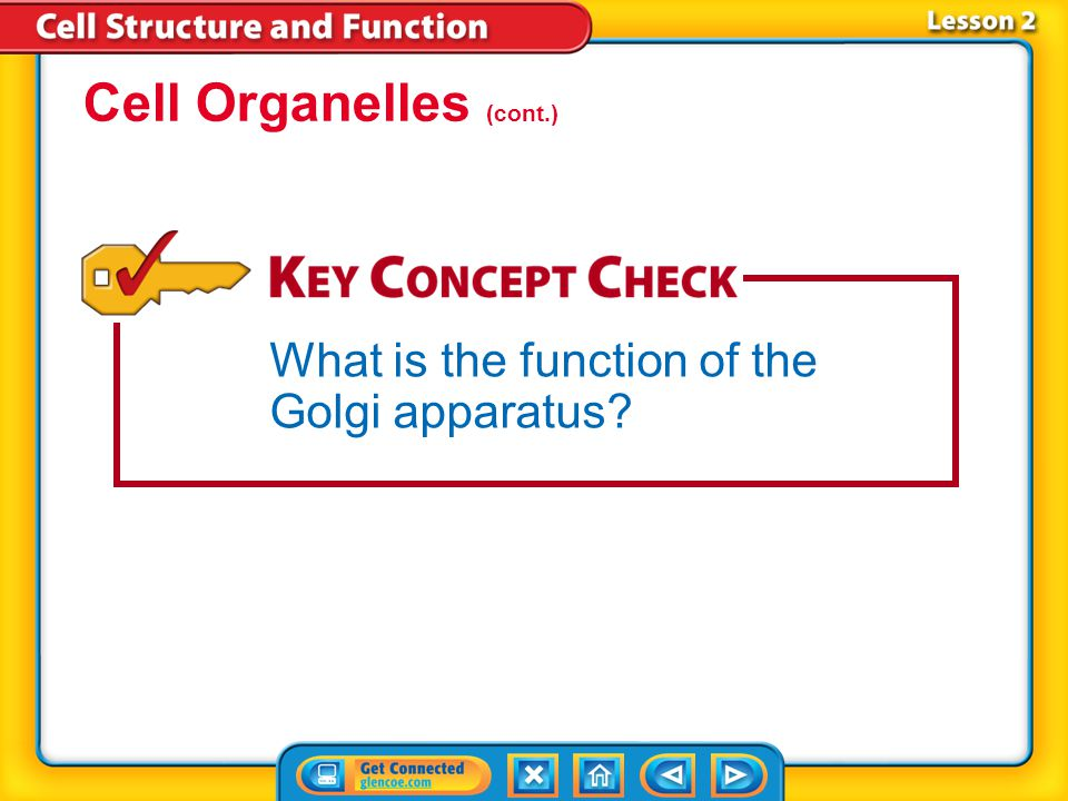 Cell Organelles (cont.)
