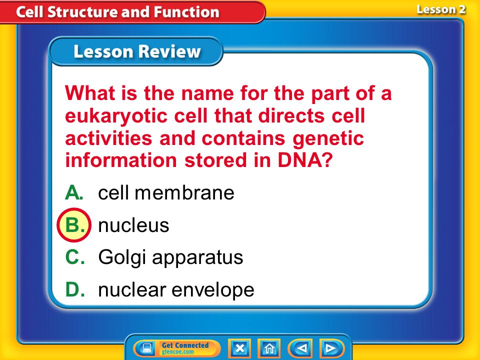 What is the name for the part of a eukaryotic cell that directs cell activities and contains genetic information stored in DNA