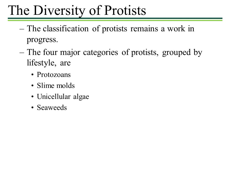 The Diversity of Protists
