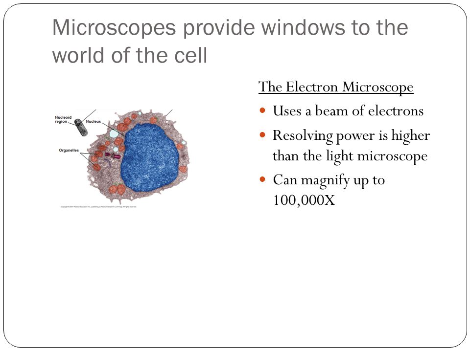 Microscopes provide windows to the world of the cell