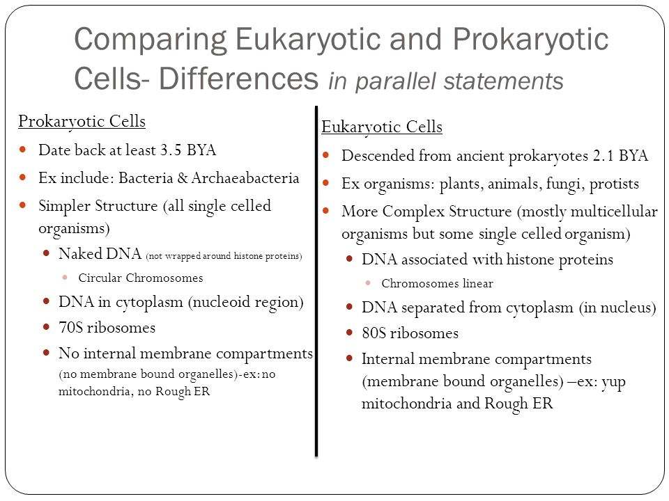 Comparing Eukaryotic and Prokaryotic Cells- Differences in parallel statements