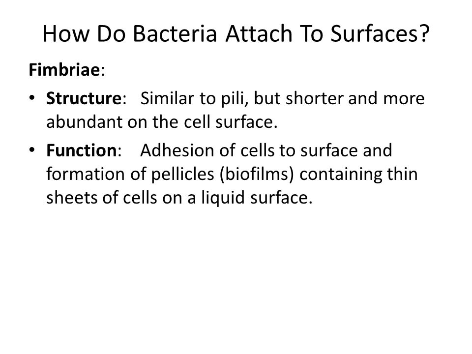 How Do Bacteria Attach To Surfaces