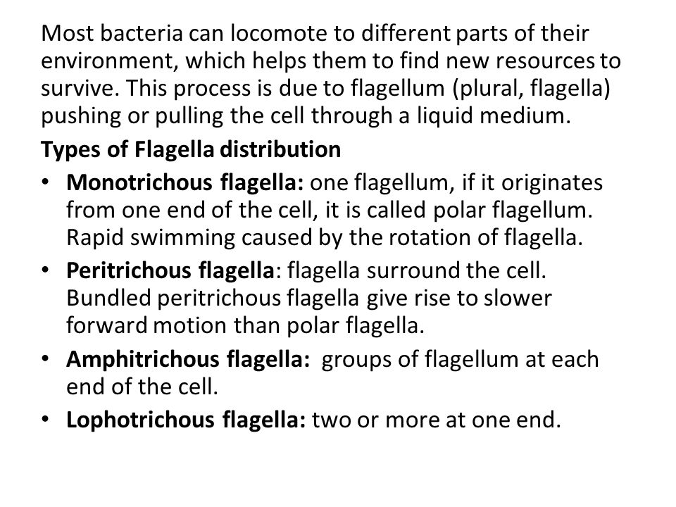 Most bacteria can locomote to different parts of their environment, which helps them to find new resources to survive. This process is due to flagellum (plural, flagella) pushing or pulling the cell through a liquid medium.