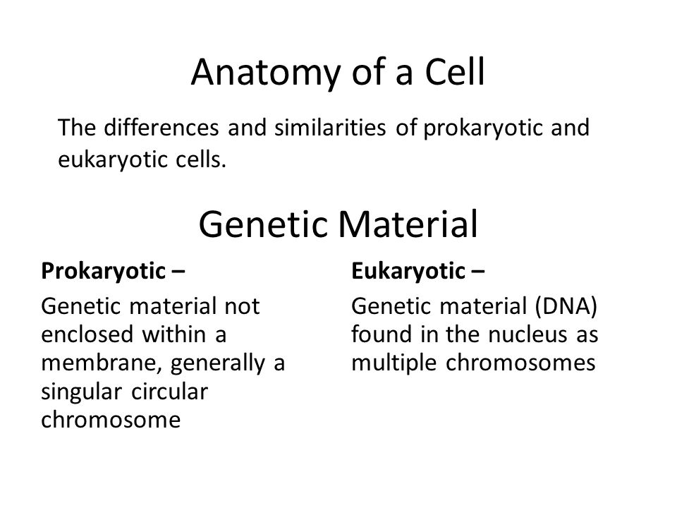 Anatomy of a Cell Genetic Material