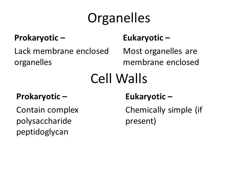 Organelles Cell Walls Prokaryotic – Lack membrane enclosed organelles