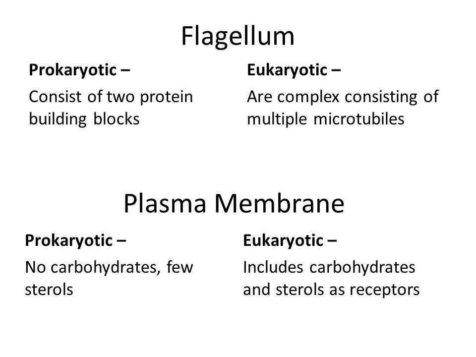 Flagellum Plasma Membrane