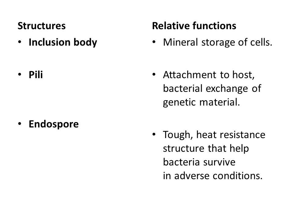Structures Inclusion body. Pili. Endospore. Relative functions. Mineral storage of cells.