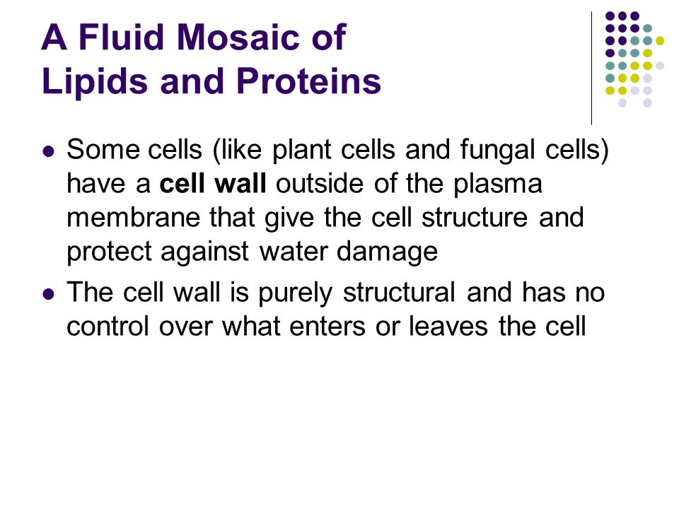 A Fluid Mosaic of Lipids and Proteins