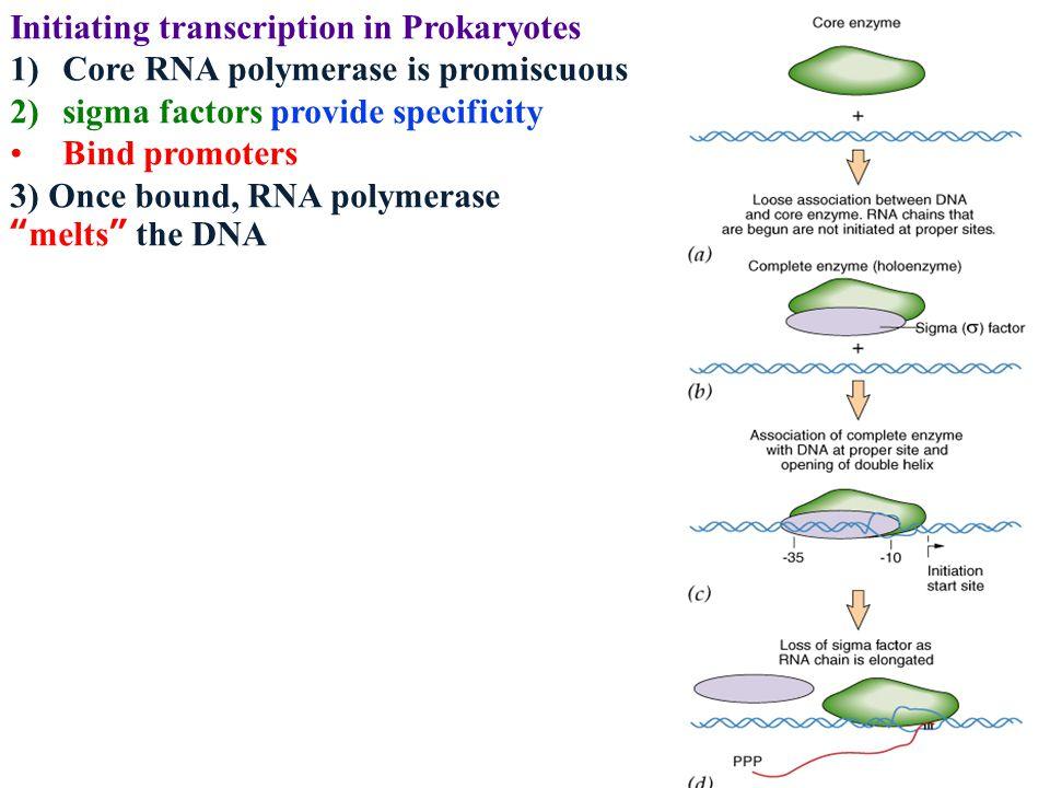 Initiating transcription in Prokaryotes