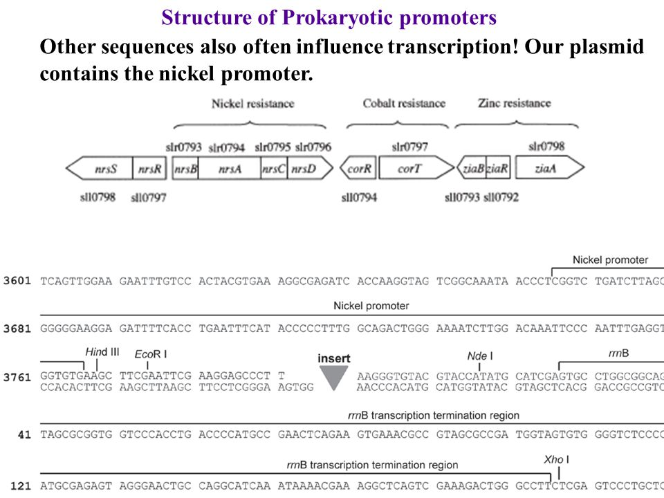 Structure of Prokaryotic promoters