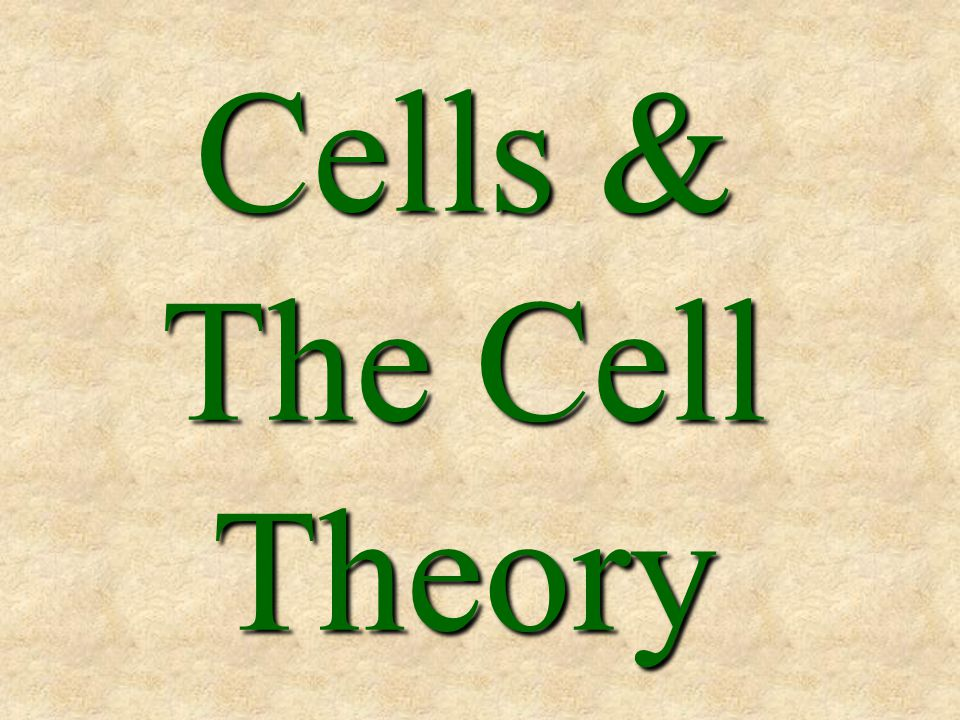 Cells & The Cell Theory