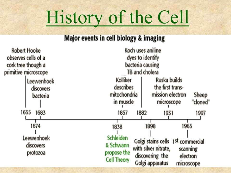 History of the Theoretical Models of the Cell Membrane