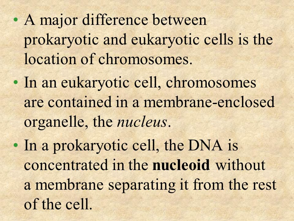 A major difference between prokaryotic and eukaryotic cells is the location of chromosomes.