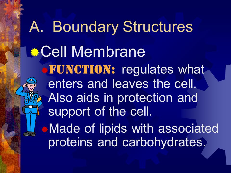 A. Boundary Structures Cell Membrane