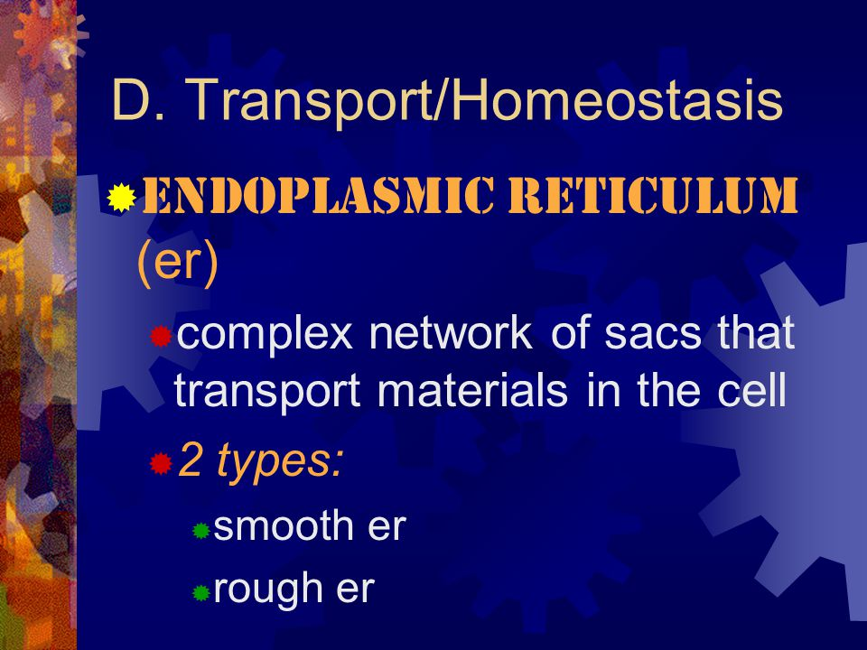D. Transport/Homeostasis