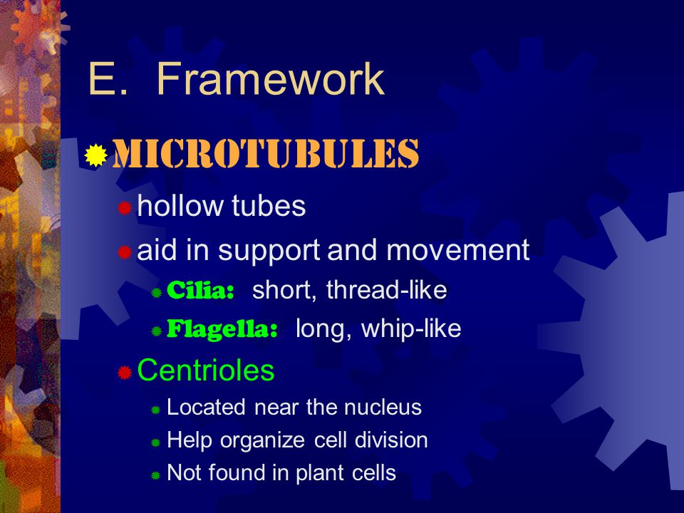 E. Framework Microtubules hollow tubes aid in support and movement
