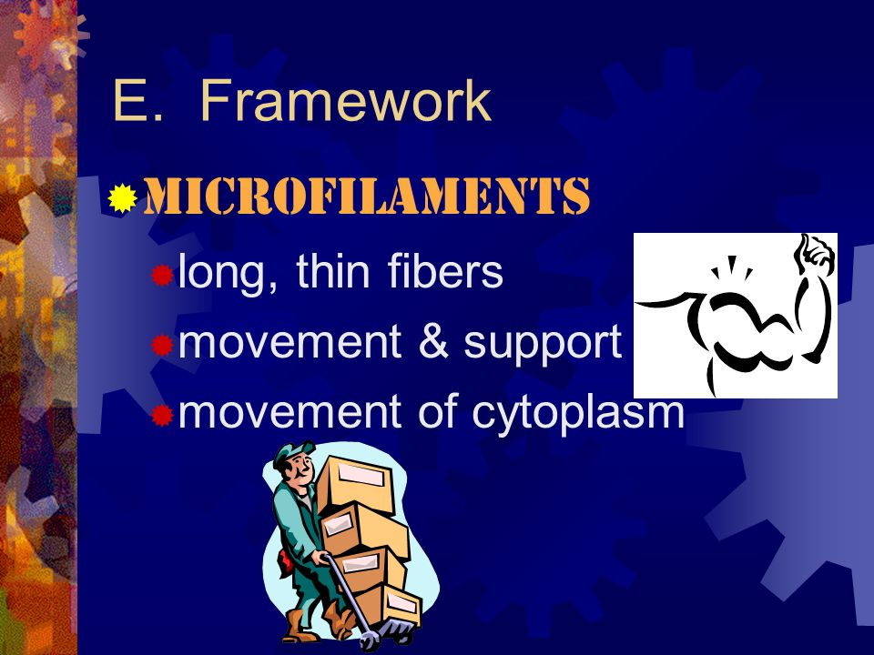 E. Framework Microfilaments long, thin fibers movement & support