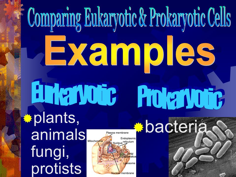 Comparing Eukaryotic & Prokaryotic Cells