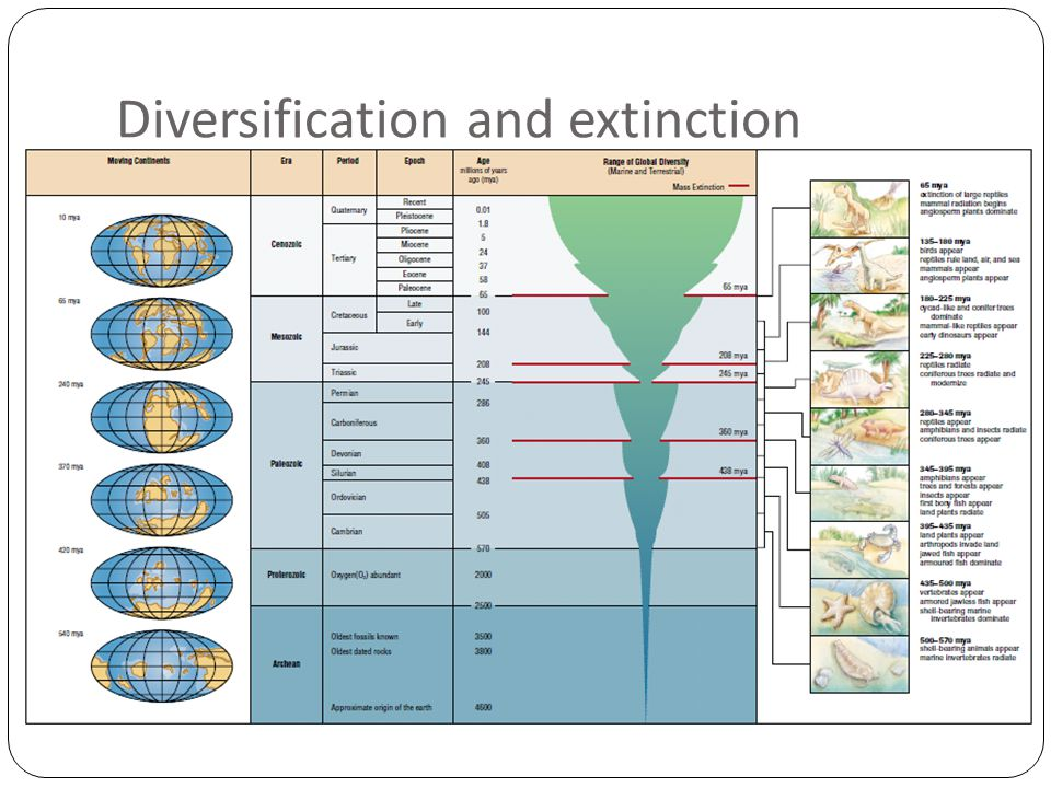 Diversification and extinction