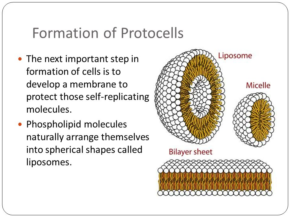 Formation of Protocells