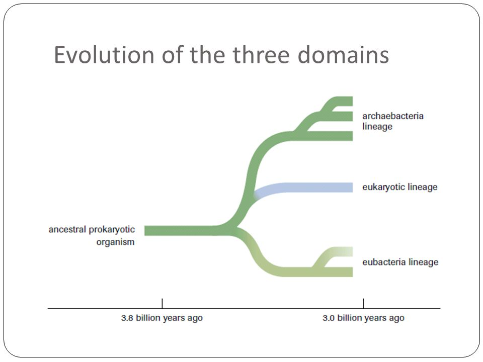 Evolution of the three domains